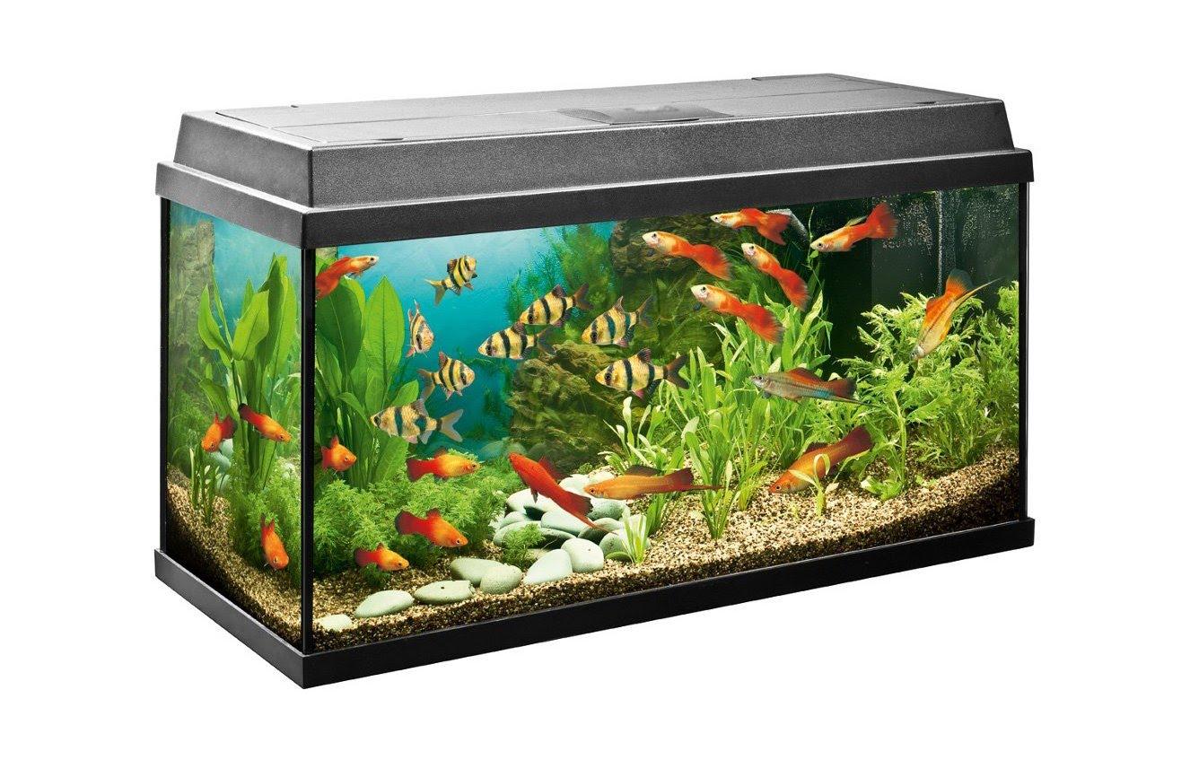 Стандартный аквариум