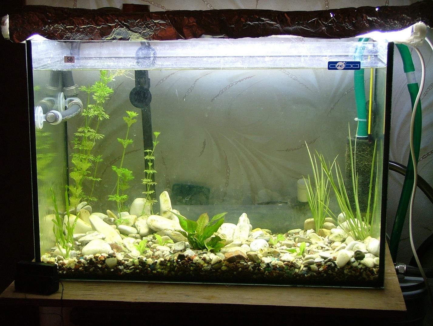 Голландский аквариум для растительности