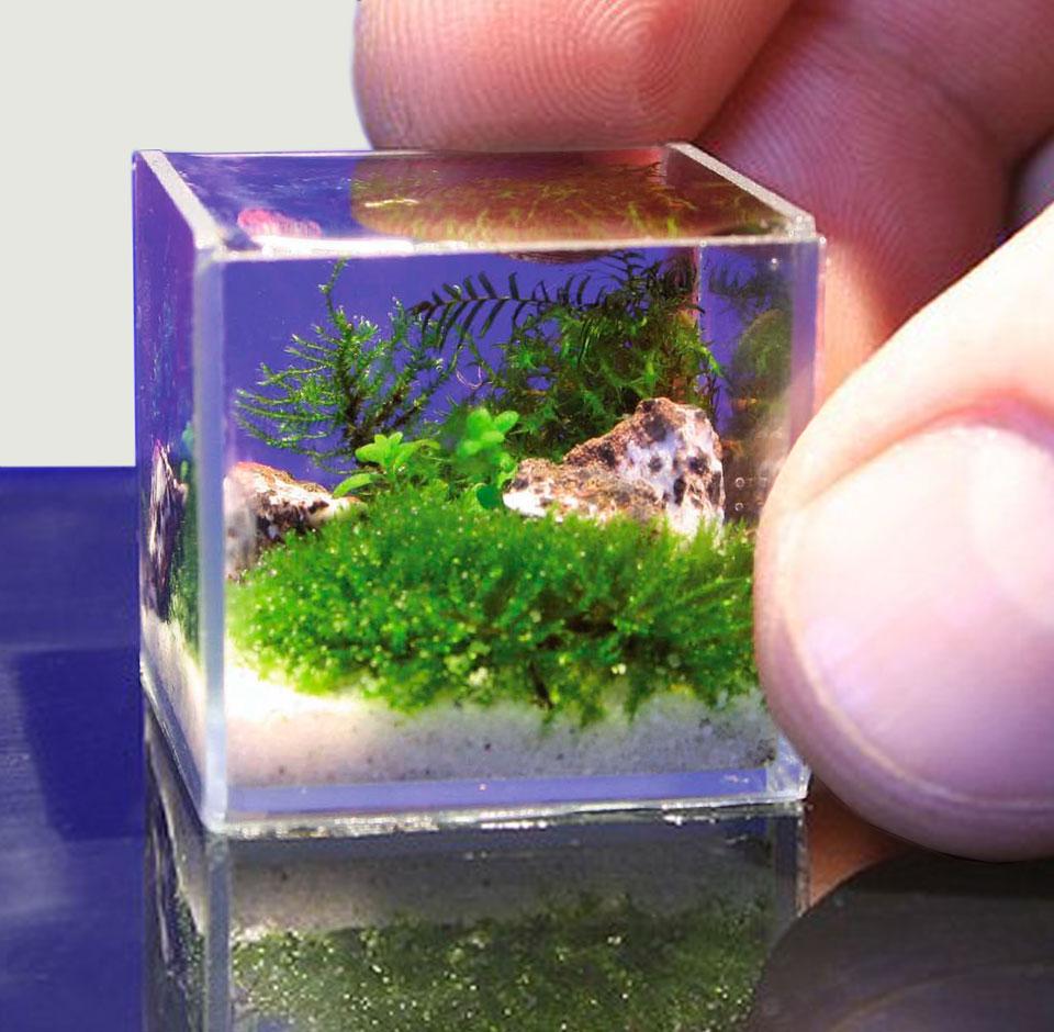 Крошечный аквариум