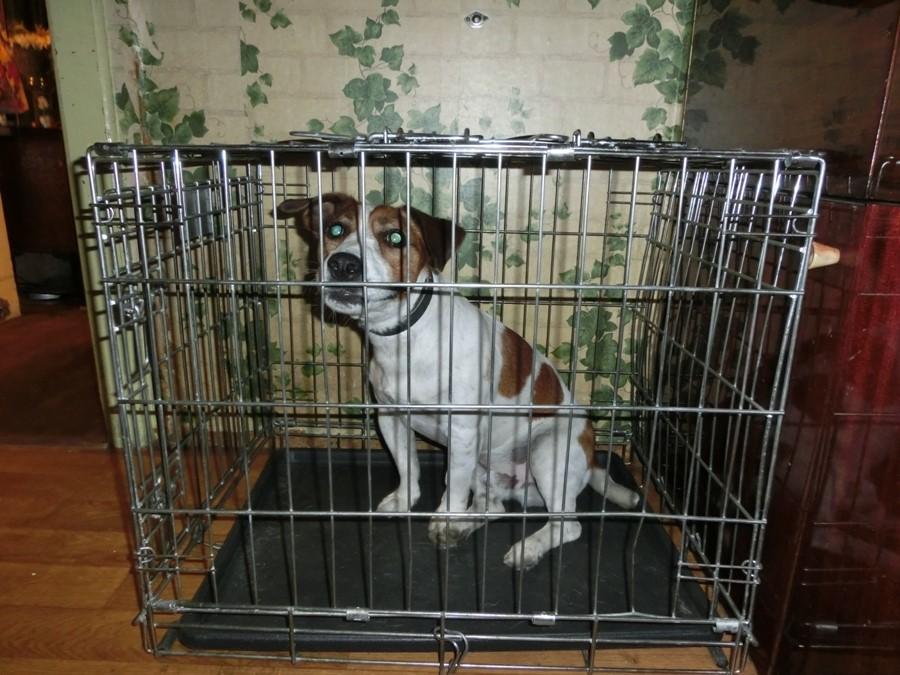 Передвижения больной собаки ограничивают