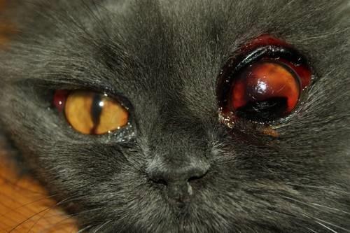 Глубокая рана глаза