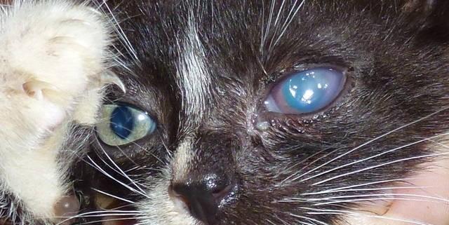 Сонник котенок приснился к чему снится во сне котенок