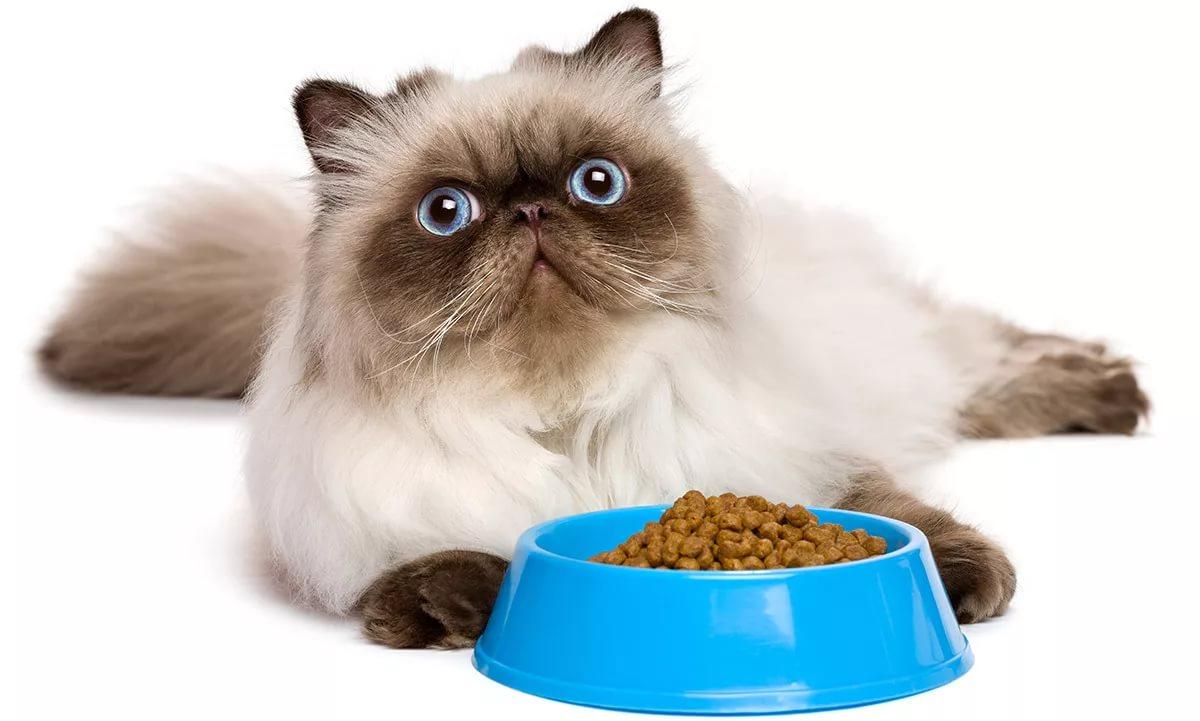 Не всем кошкам удобно есть
