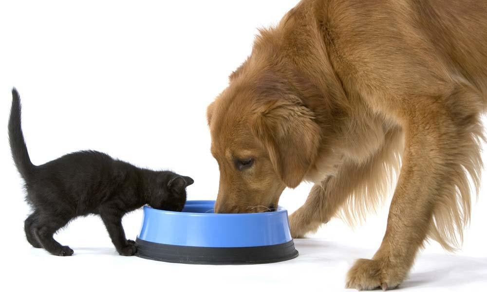 Собачьи корма вредят кошкам