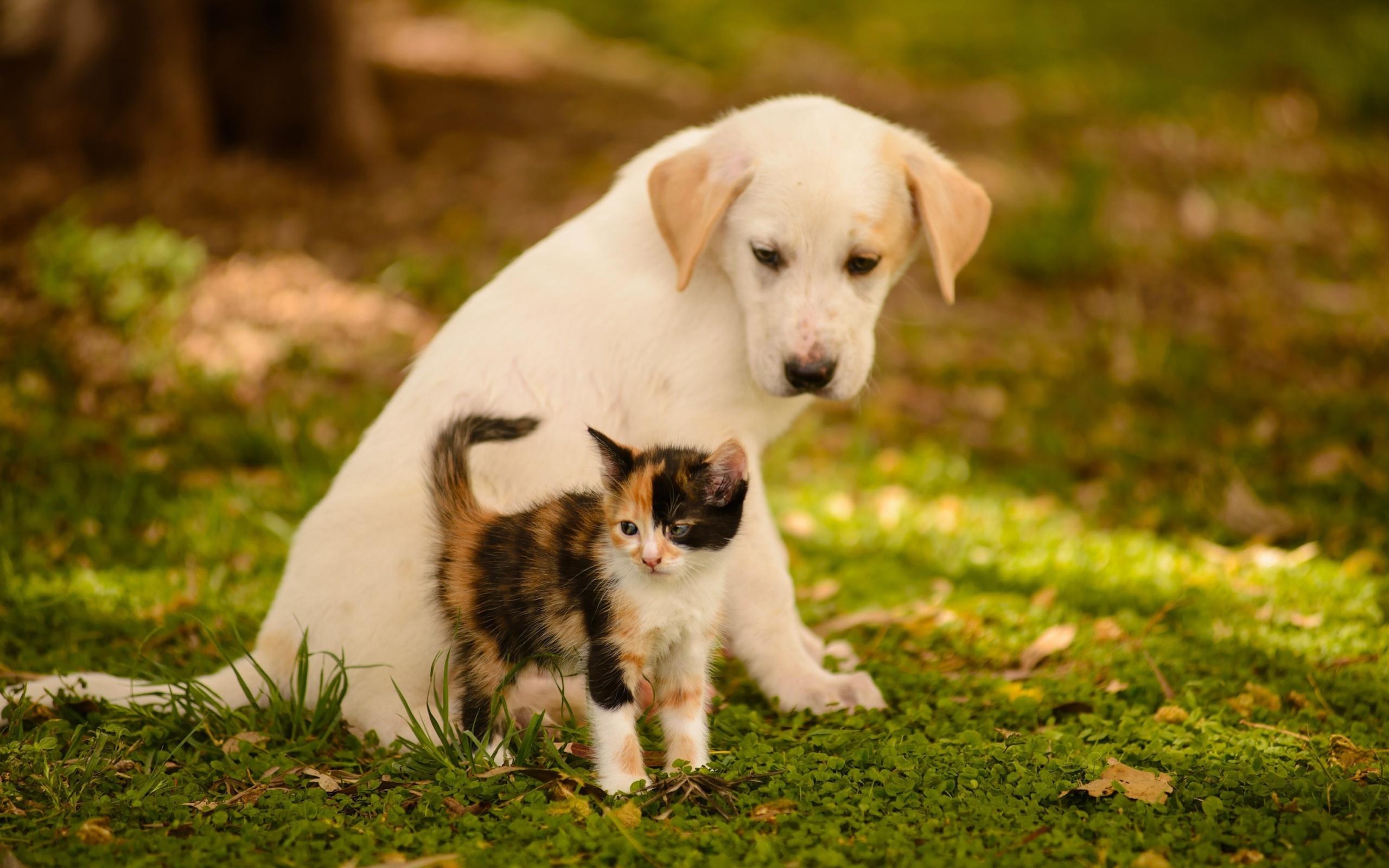 Котятам и щенкам нужны витамины