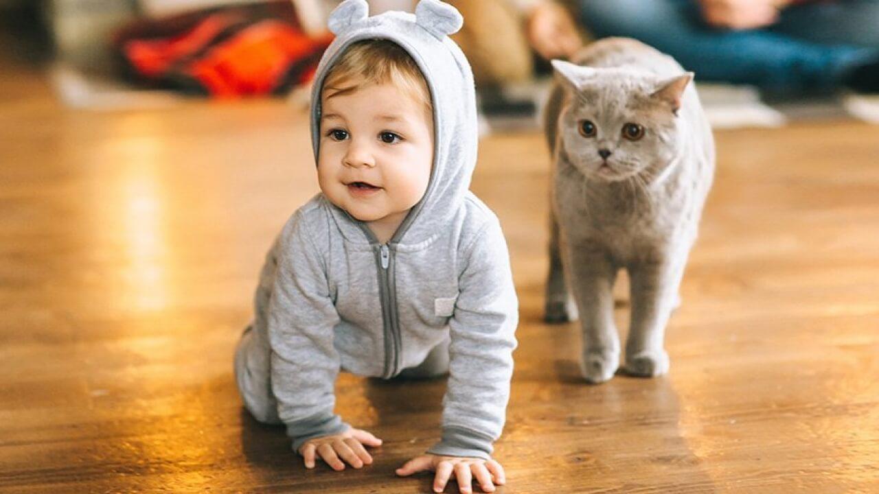Подружить ребенка и кошку не так трудно