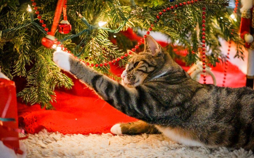 Новогодние украшения опасны для кошек