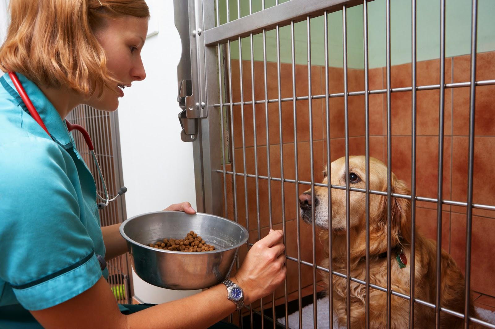Ветеринары часто используют клетки