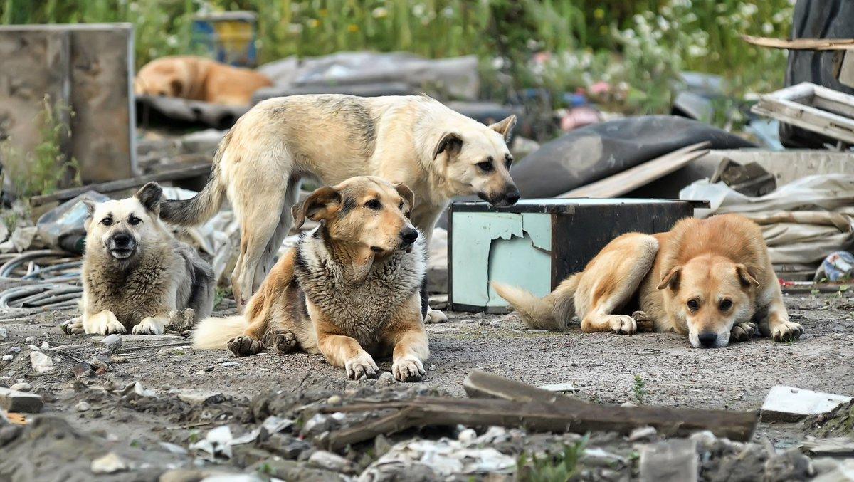 Закон направлен на защиту животных