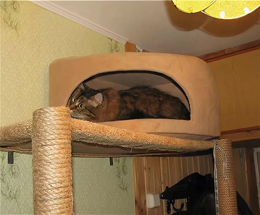 Укрытие для кошки