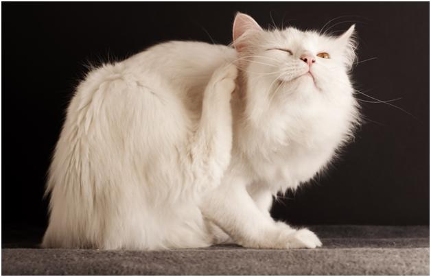 Кошка с блохами