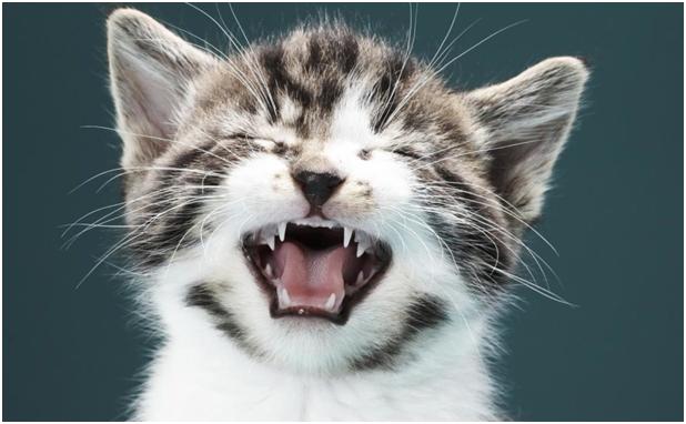 Кот чихает