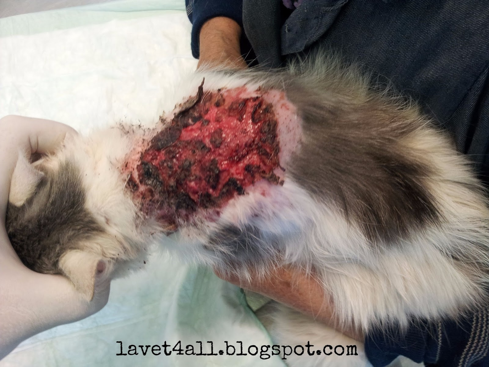 У кота болячки на коже