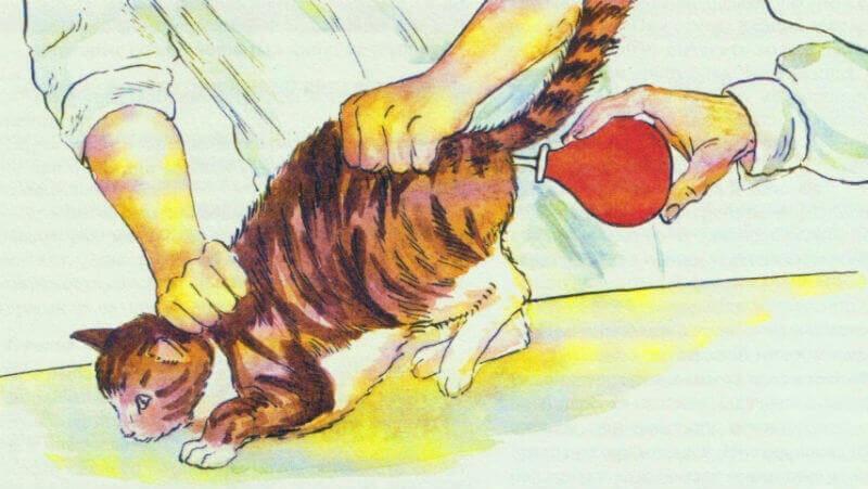 Кошке делают клизму