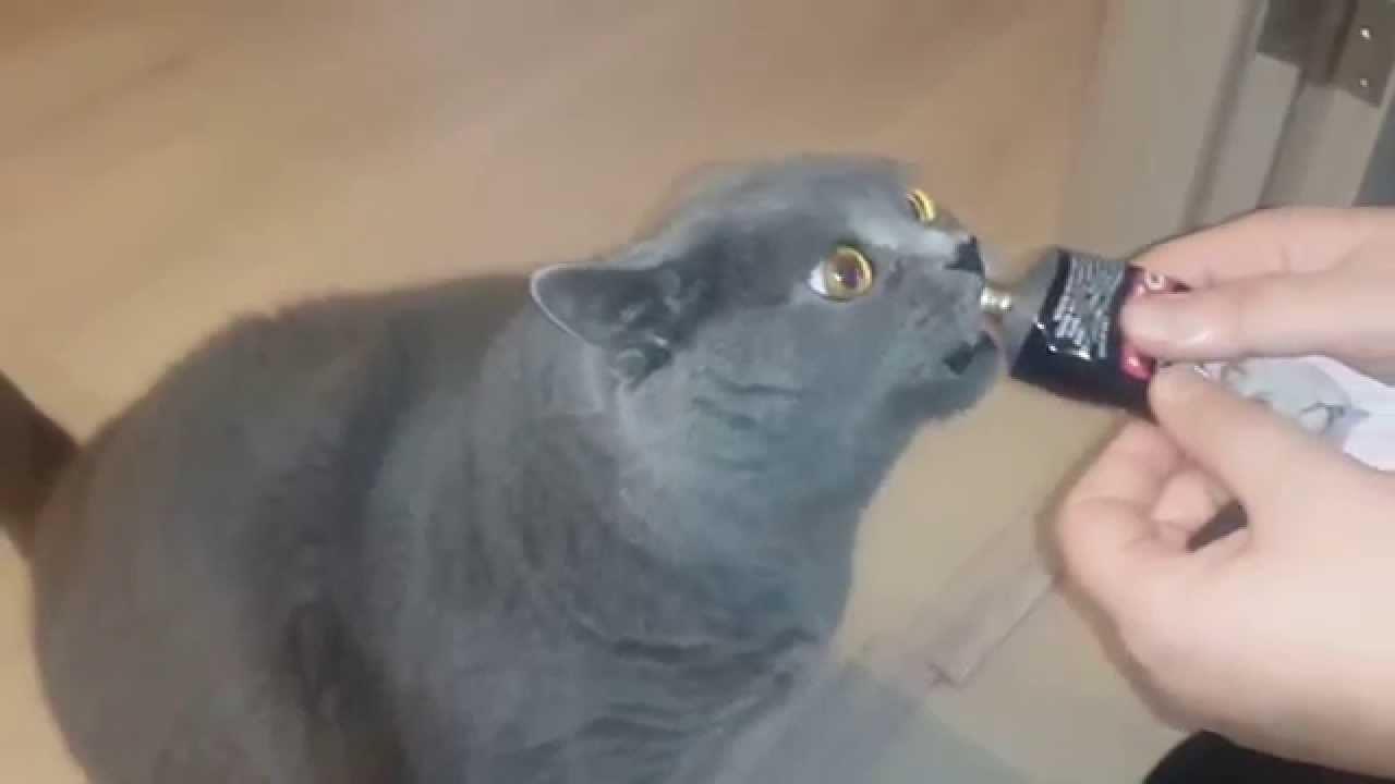 Мальт-паста нравится коту
