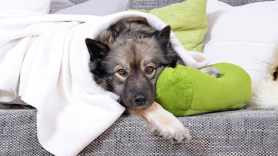 При бронхите у собаки угнетенное состояние