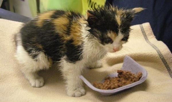 Заболевший котенок