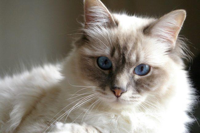 Выздоровевший кот