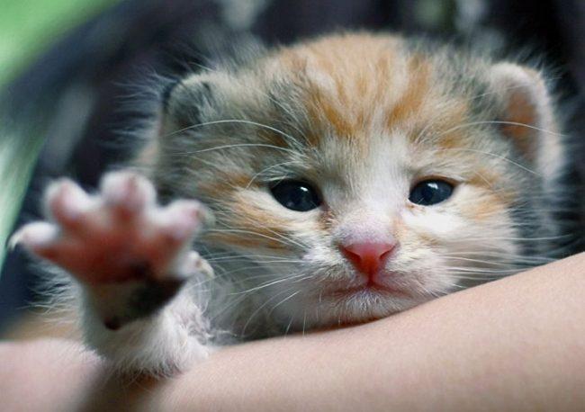 Здоровый котенок