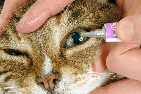 Лечение офтальмологических заболеваний антибактериальной мазью