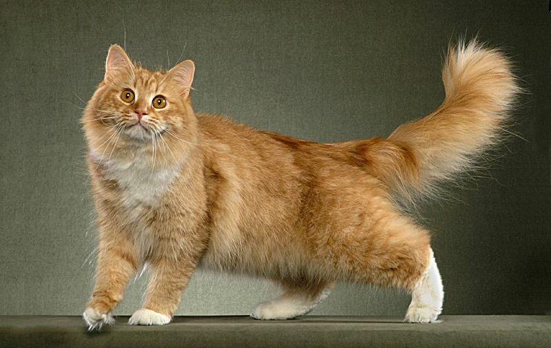 Здоровая рыжая кошка