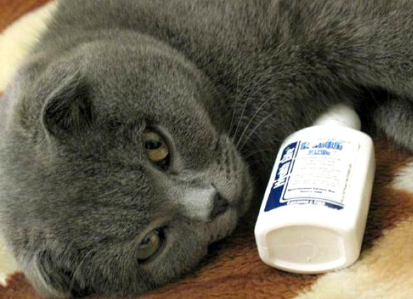 Кошка и лекарство