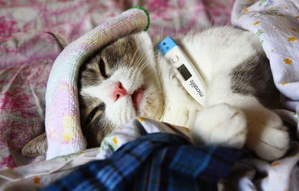 Приболевшая кошка