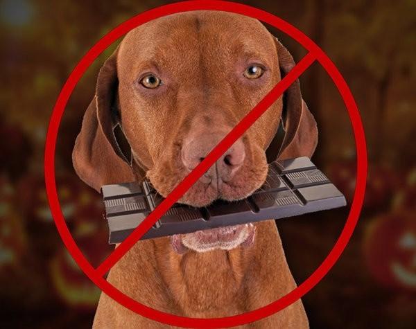 Собаке не стоит давать обычную еду