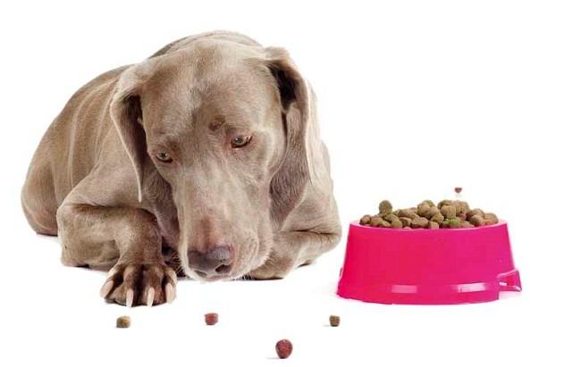 Если собака ничего не ест, она заболела