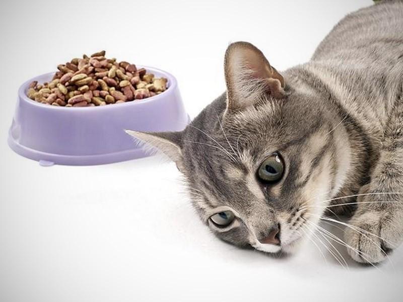 Кошка отказалась от корма