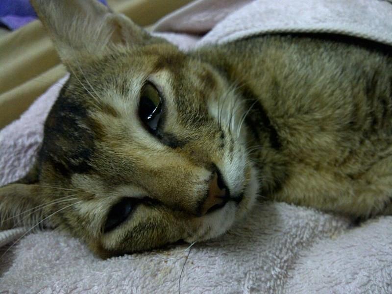 Для больной кошки необходим постельный режим