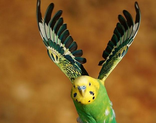 Попугаю надо летать