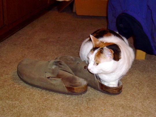 Кот метит территорию тапочка