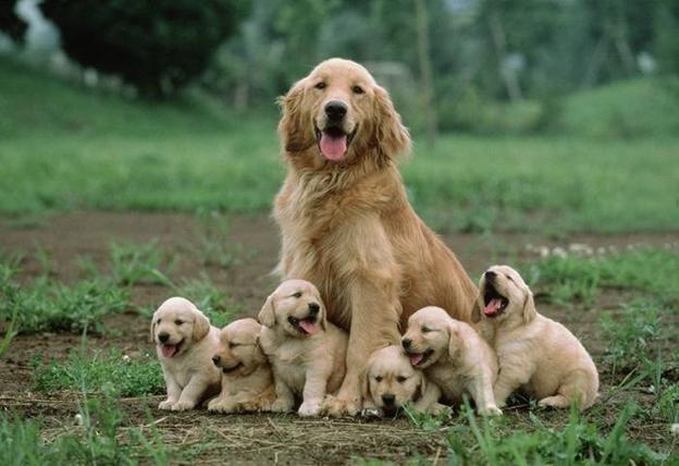 Быть щенкам или не быть