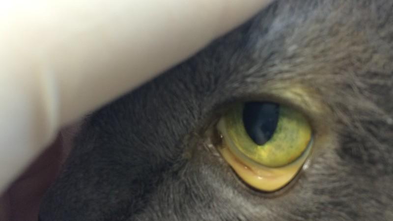 Желтушность слизистых — один из признаков лептоспироза