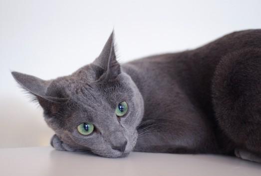 Здоровая кошка