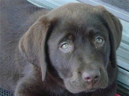 Симптомы чумки у собаки