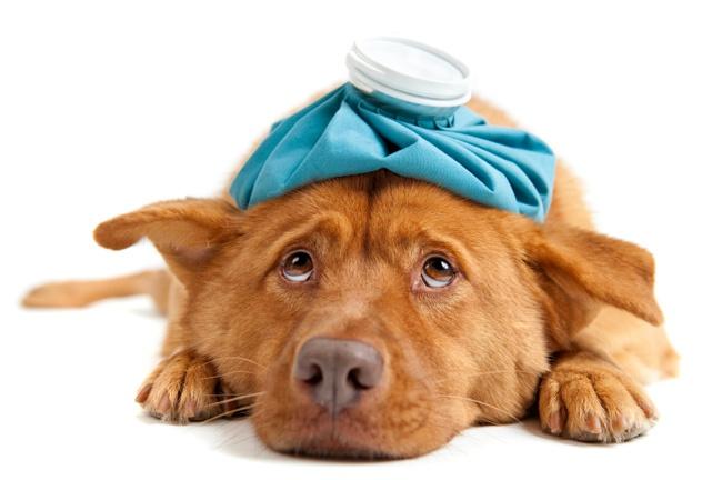 Приболевшая собака