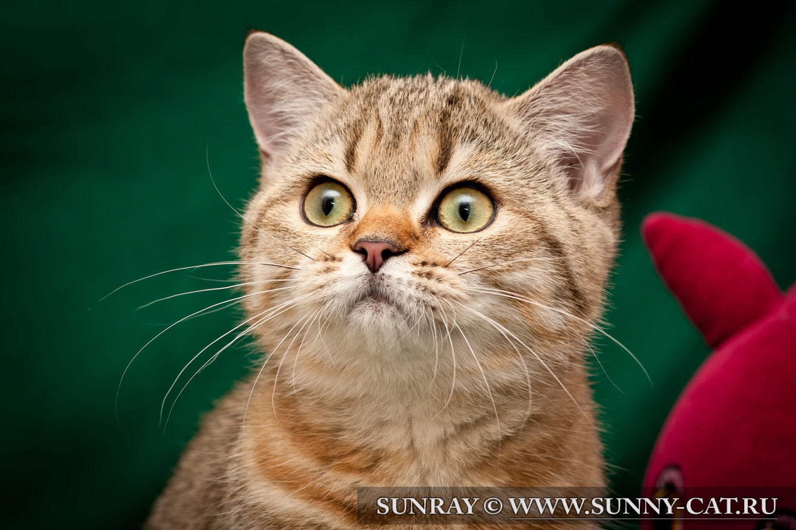 Кот со здоровыми усами