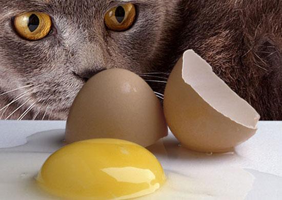 В сырых яйцах содержится антивитамин авидин, вызывающий кожные патологии