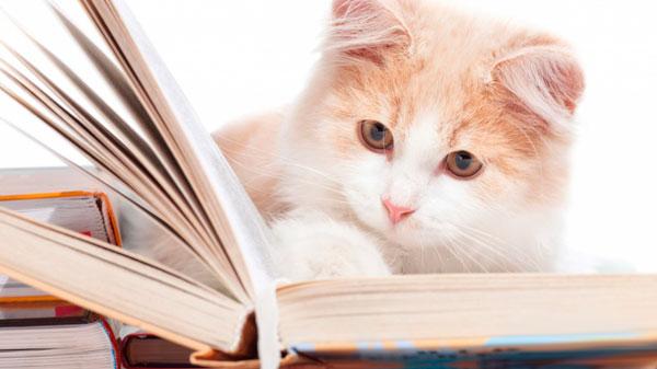 Как происходит заражение кошек микоплазмозом