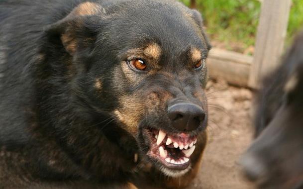 Агрессия собаки