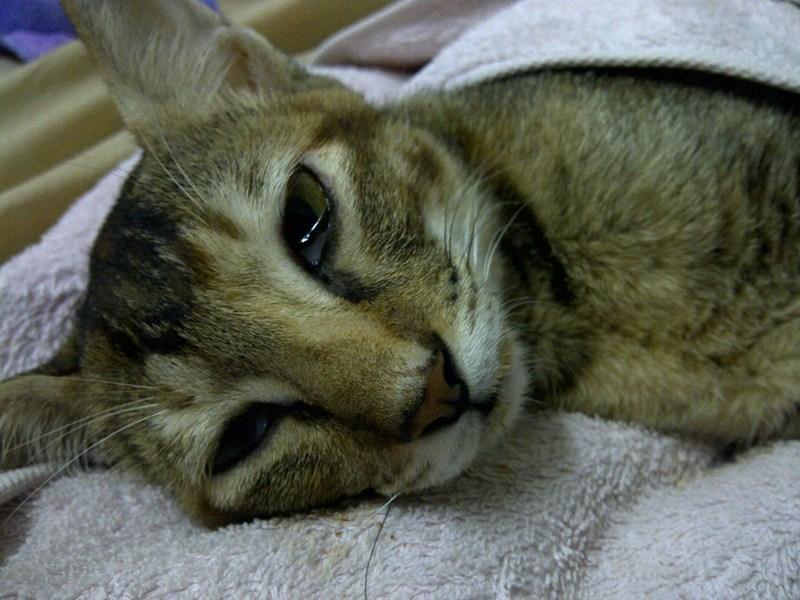 Отравленная кошка угнетена