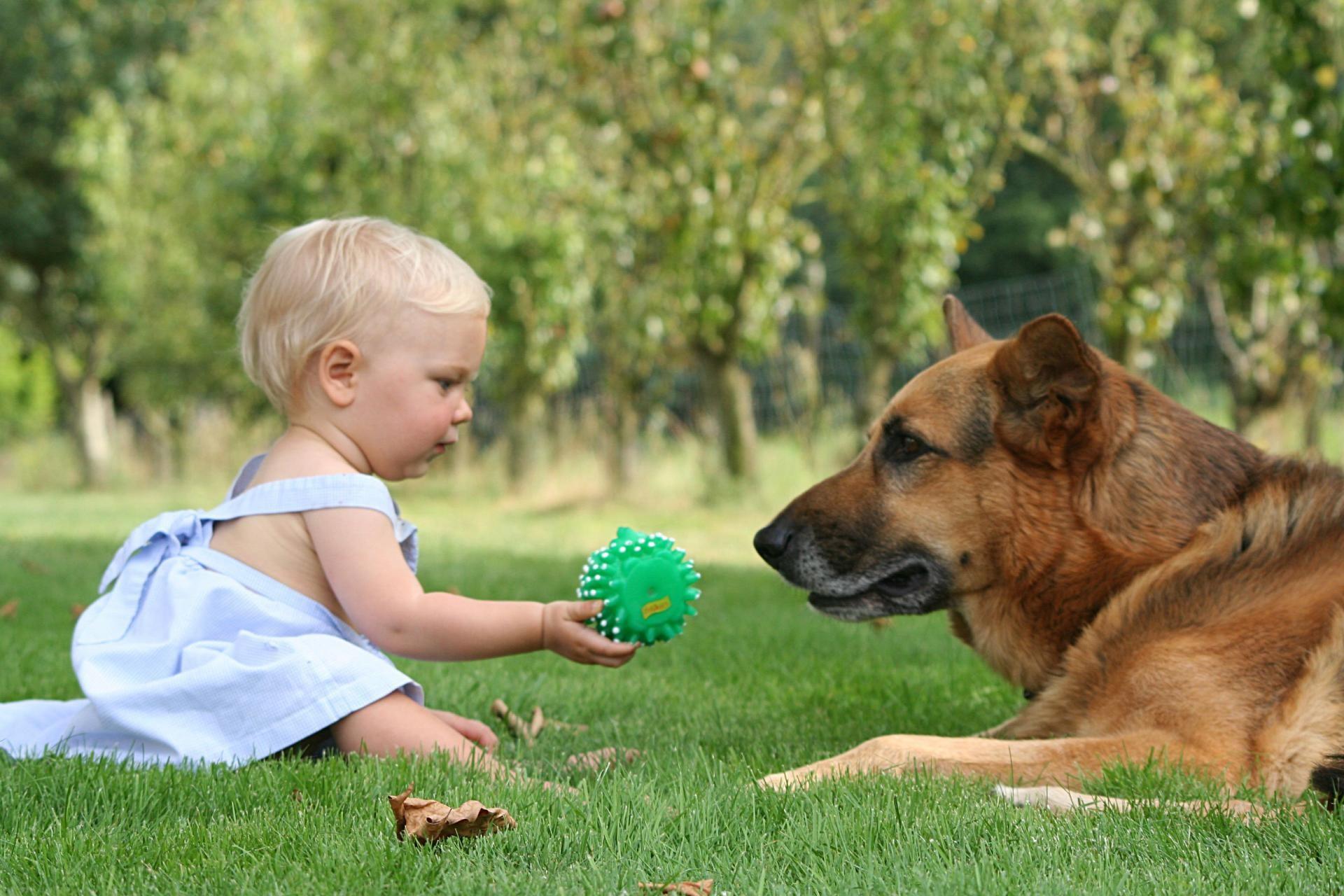 Опасно оставлять ребёнка наедине с собакой