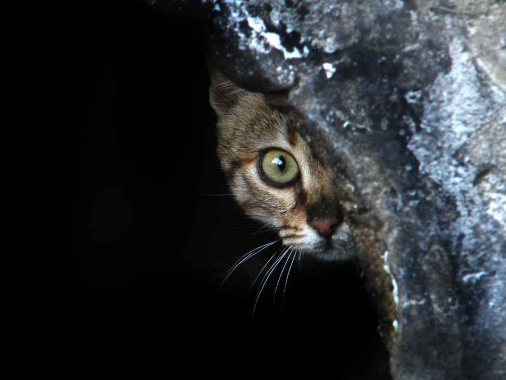 Кошка прячется ото всех