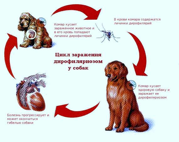 Цикл заражения
