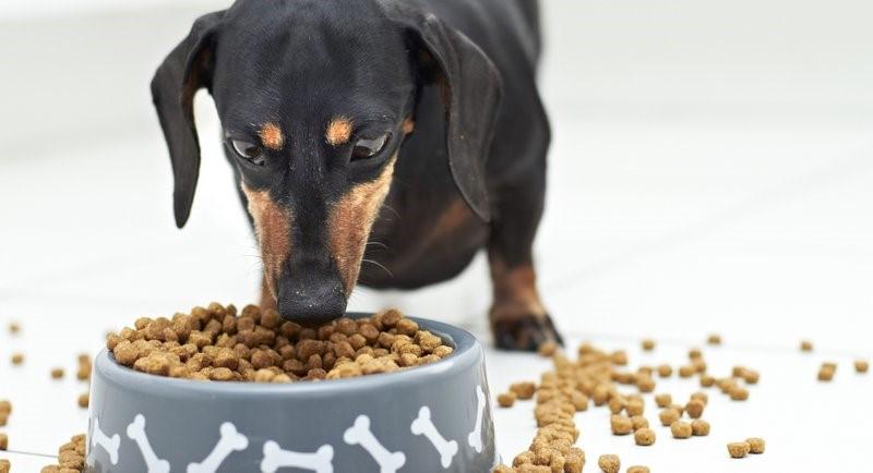 Сухие корма удобны для собак