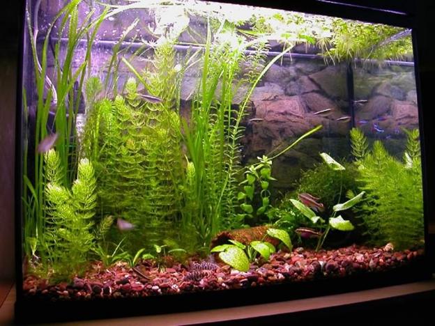 Сыпать соль в аквариум нельзя, погибнут растения