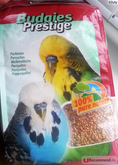 Кормите попугая качественными готовыми кормами