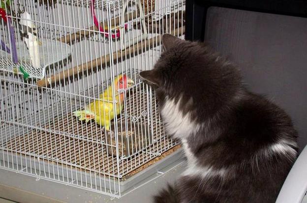 Общение котов с птичками надо пресекать